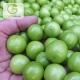 نهال گوجه سبز