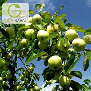 نهال سیب فرانسه