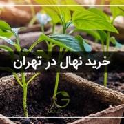 خرید نهال تهران