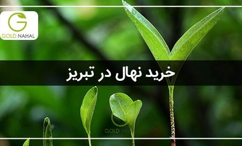 خرید نهال در تبریز