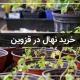خرید نهال در قزوین