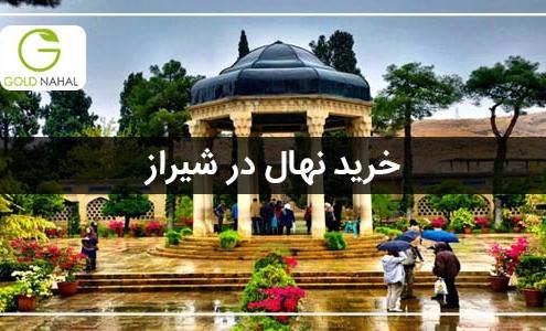 خرید نهال شیراز
