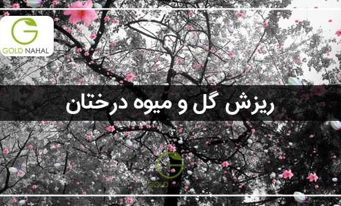 ریز گل و میوه درختان