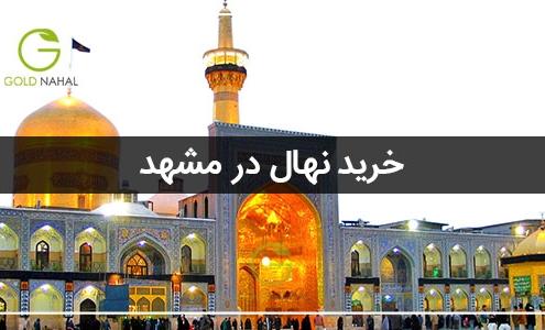 خرید نهال در مشهد