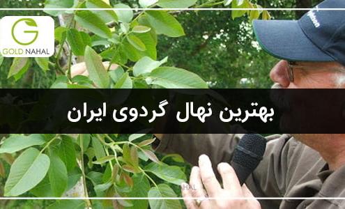 بهترین نهال گردویی که در ایران می توان در نظر گرفت نهال های مناسب هر منطقه ی آب و هوایی می باشد.