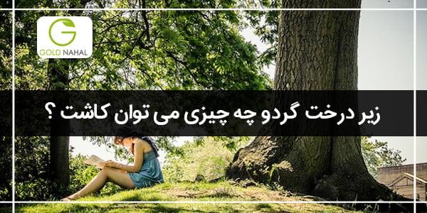 زیر درخت گردو چه چیزی بکاریم